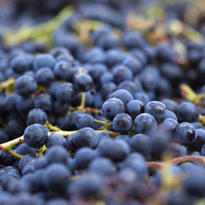 Nieuwe druiven, zelfde Bordeaux