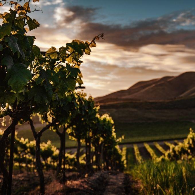 Biowijn, biodynamische wijn en natuurwijn