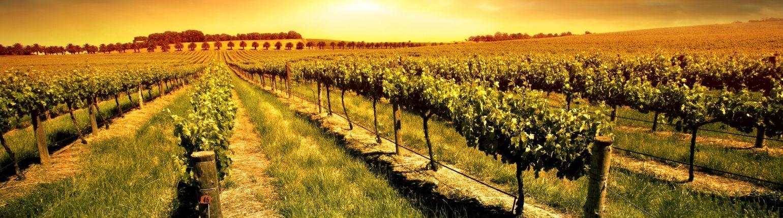 biowijn, biodynamische wijn, natuurwijn